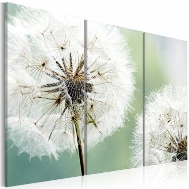 PISSENLITS DUVETEUX Tableau sur toile 3 pièces 60x40 cm